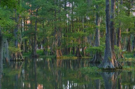 Photo : Lac Cypress dans le campus de Lafayette, louisiane